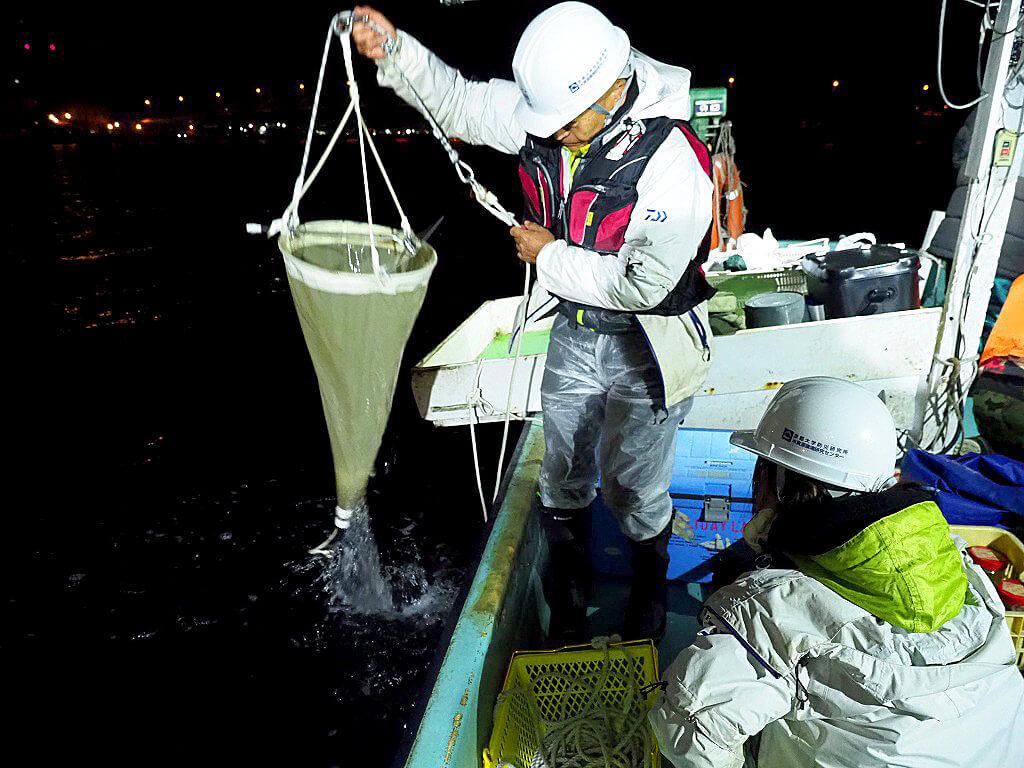 「京の川の恵みを活かす会」では、大阪の淀川水系におけるアユの一生を追跡し、天然アユの豊漁と不漁のメカニズムの解明のためデータ収集に取り組んでいる