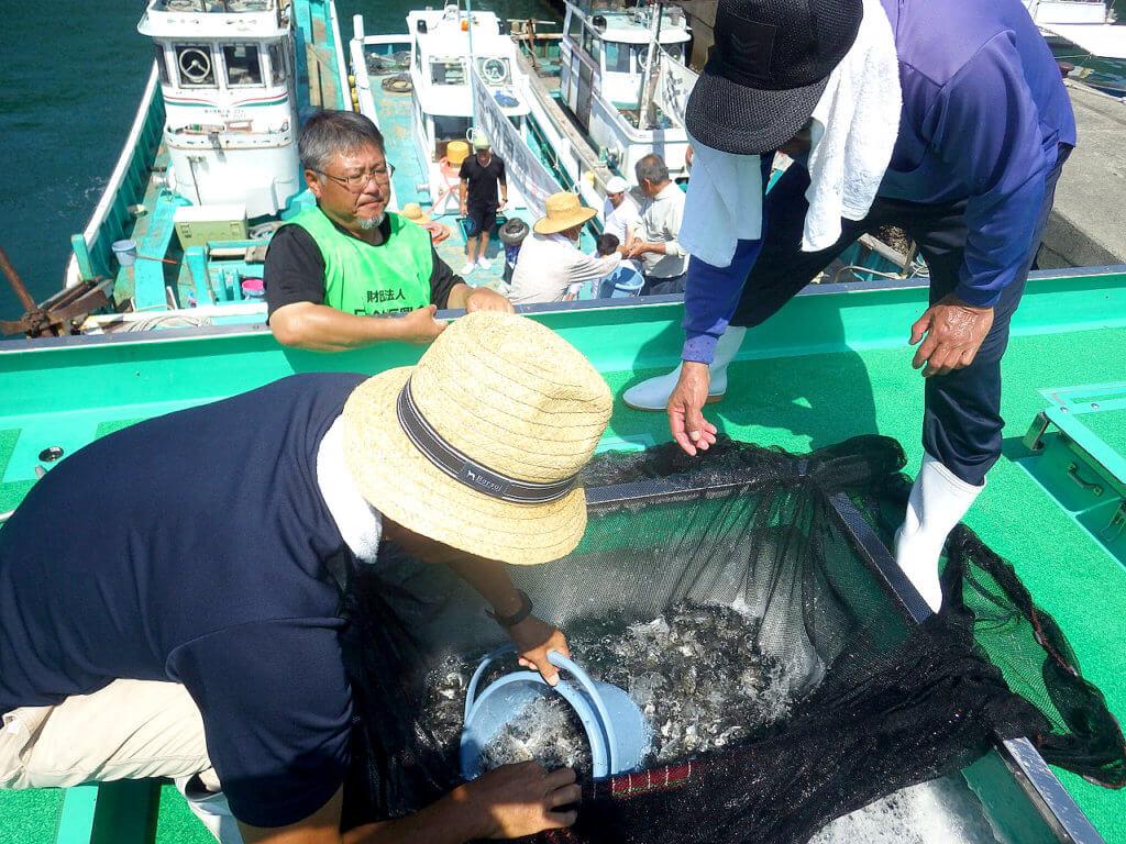 和歌山県の濱ノ瀬漁港と戸津井漁港でチヌ(クロダイ)の稚魚約1万2000尾が放流された