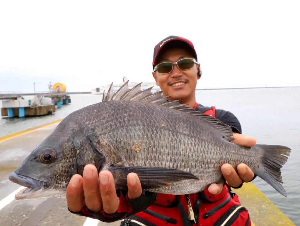 秋田港北防波堤で釣れたクロダイ