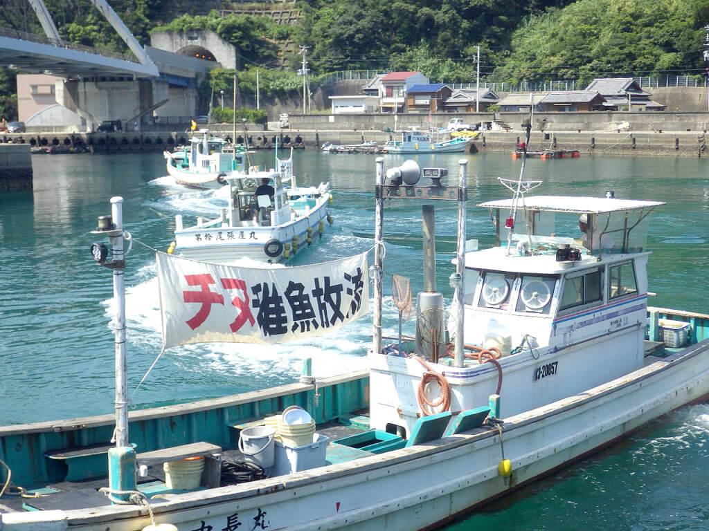 「チヌ稚魚放流」と書かれた旗を掲げて放流事業が行われた