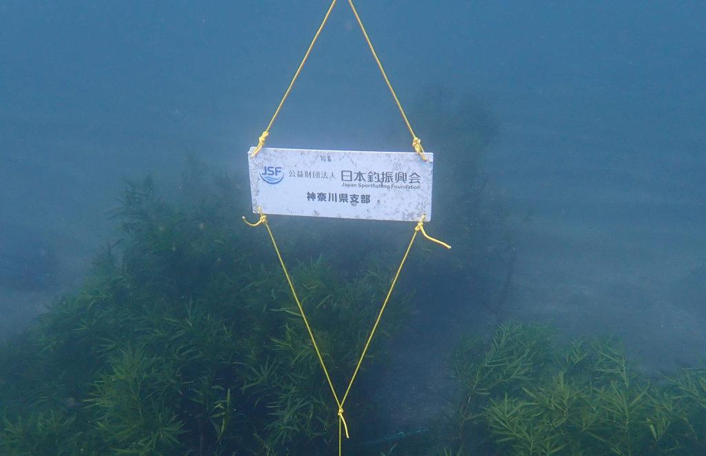 アオリイカの産卵床と(公財)日本釣振興会神奈川県支部の看板