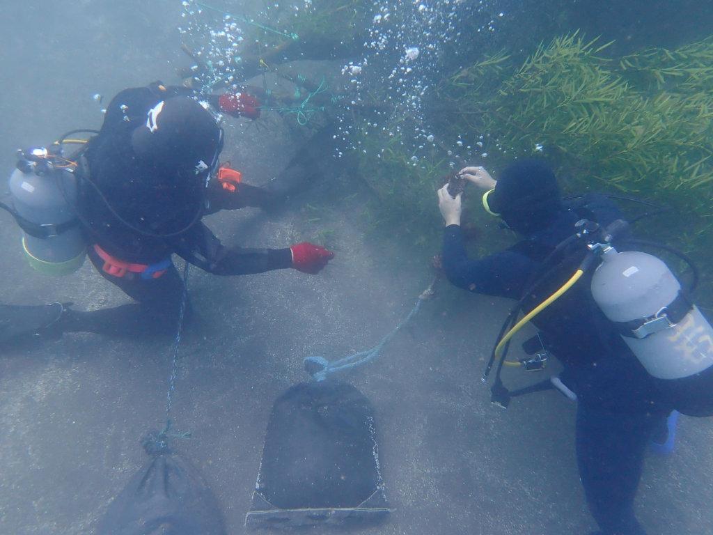 アオリイカ産卵床を水中に設置するダイバー
