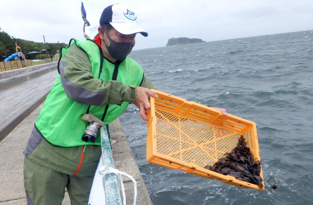 神奈川県横須賀市にある人気釣りスポット「海辺つり公園」でカサゴの稚魚が放流された