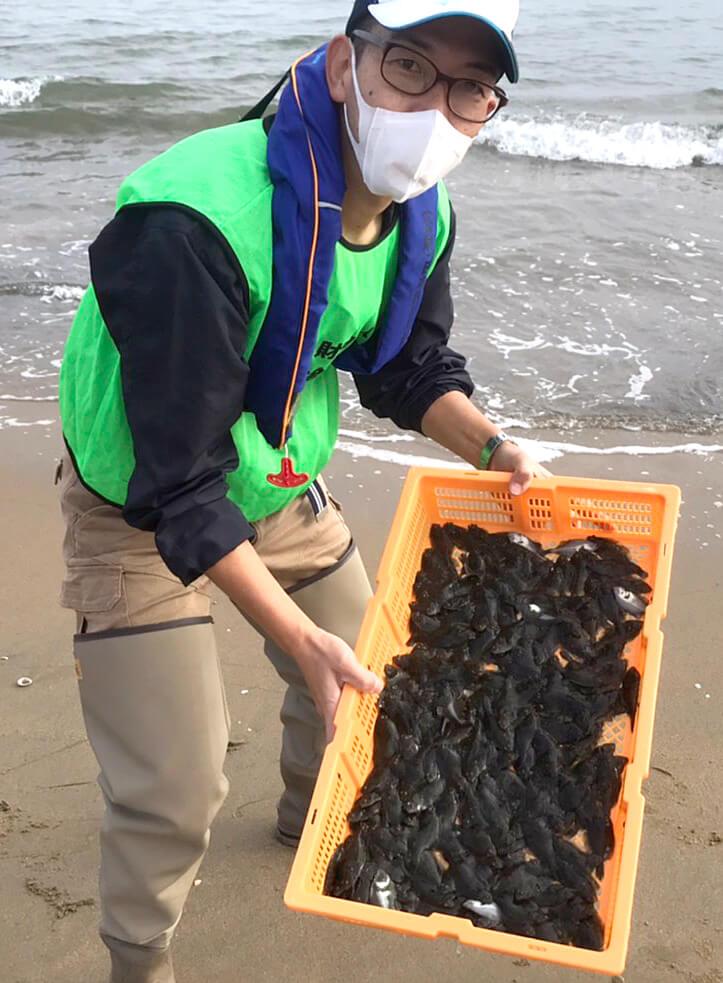 三重県津市近隣の海に2300尾のヒラメの稚魚が放流された