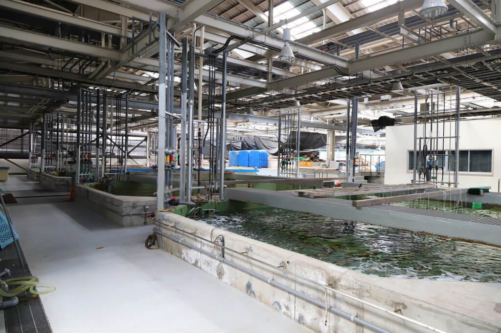 稚魚の栽培機関