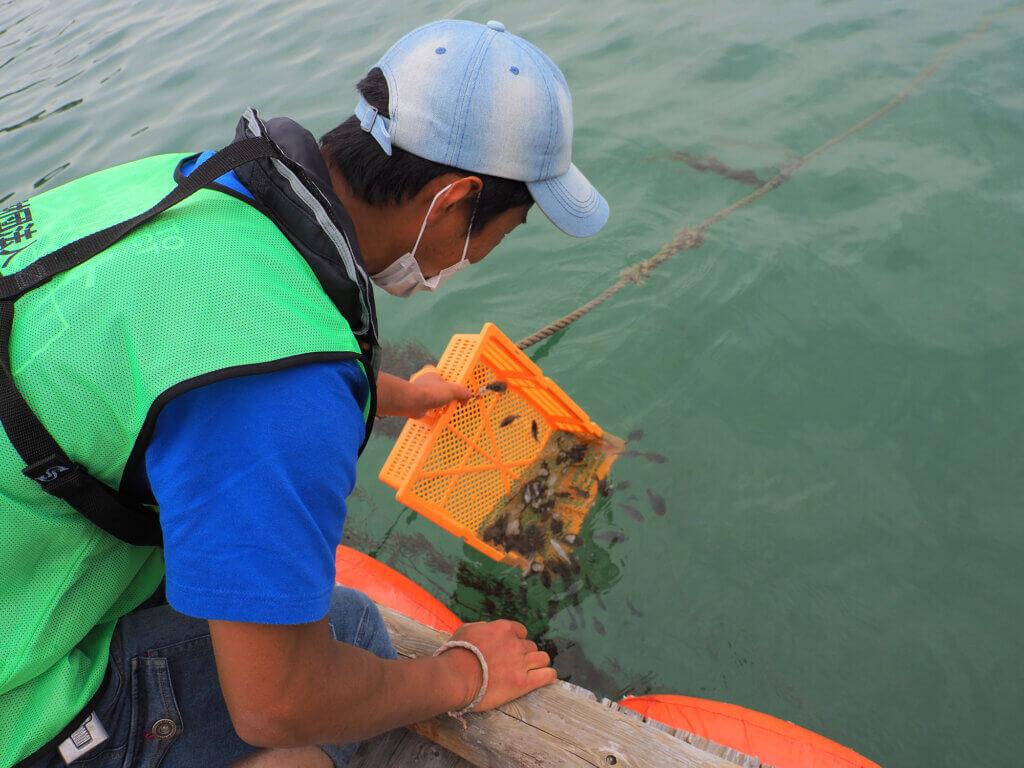 地ノ島でのヒラメ稚魚放流の様子