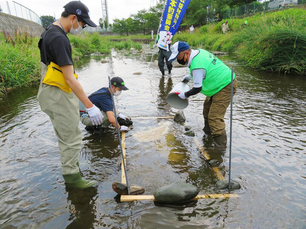 日本釣振興会埼玉県支部が行ったオイカワの産卵床作りの様子