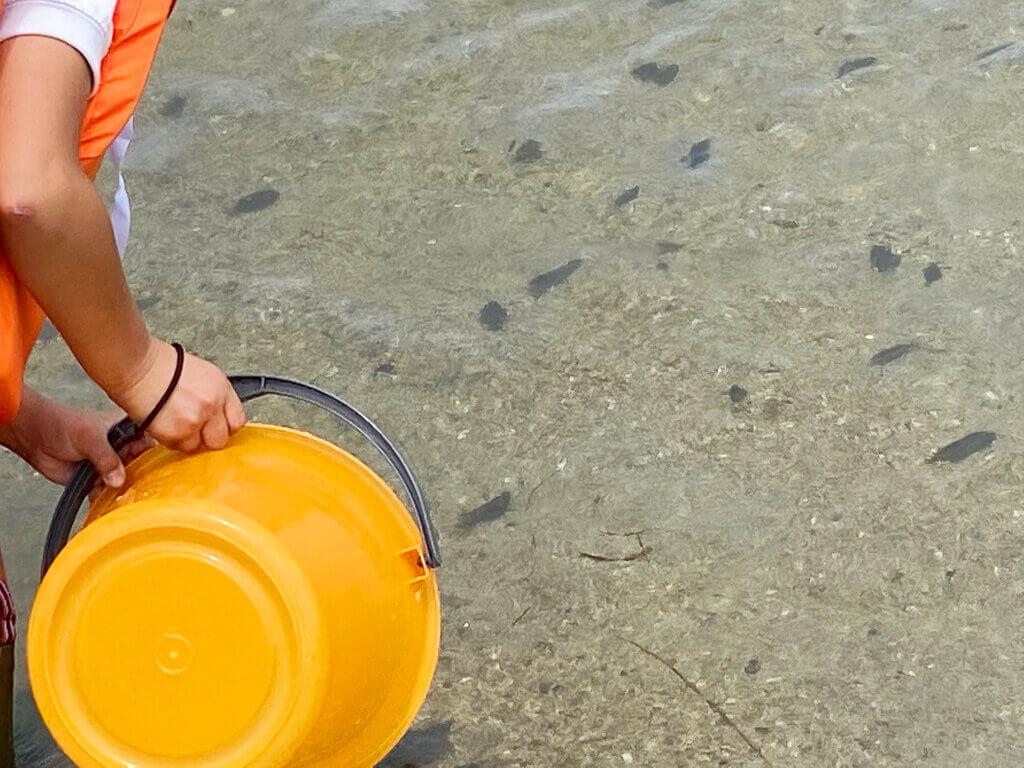 日釣振広島マコガレイ放流泳いでいくマコガレイ
